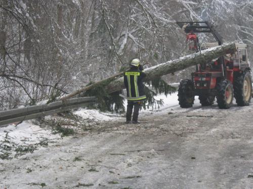 07.12.2010 Bäume über Fahrbahn